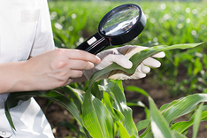 Agrochemical examination of soil and plants