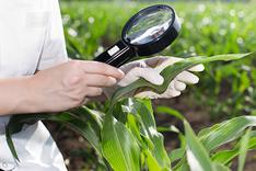 Агрохiмiчне обстеження грунту та рослин