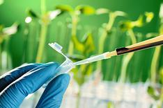 Аналіз на якісні показники насіння